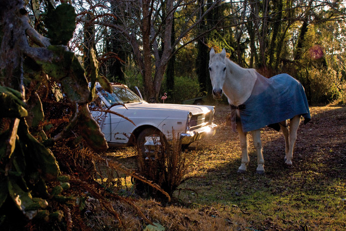 photo of horse, looking at camera, standing next to vintage car among trees
